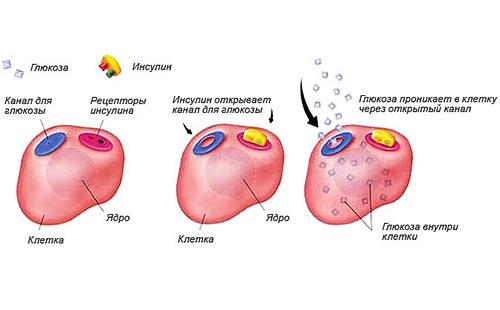 Повышенный уровень глюкозы в крови у ребенка