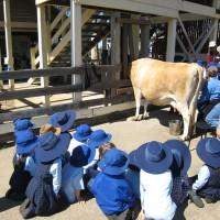 Детям на экскурсии рассказывают о том, что такое корова